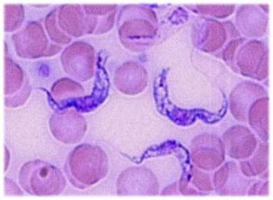 Research & Services | The Parasitology Laboratory