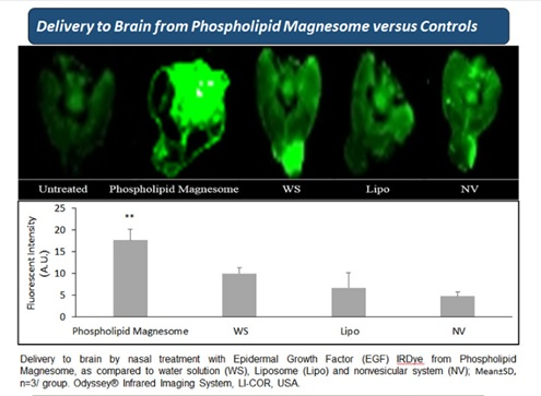 Enhanced Nasal Drug Administration to Brain by a New Nanotechnology: The Phospholipid Magnesome