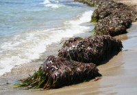 New procedure for anoxic marine sediment remediation