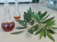 Oleuropein obtaining procedure: high purity antioxidant