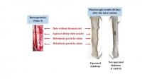New biomaterial for bone tissue regeneration