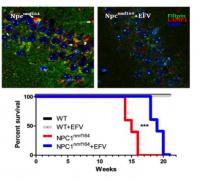 Efavirenz use for Niemann-Pick C treatment